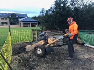 Tree Stump Removal Bolton